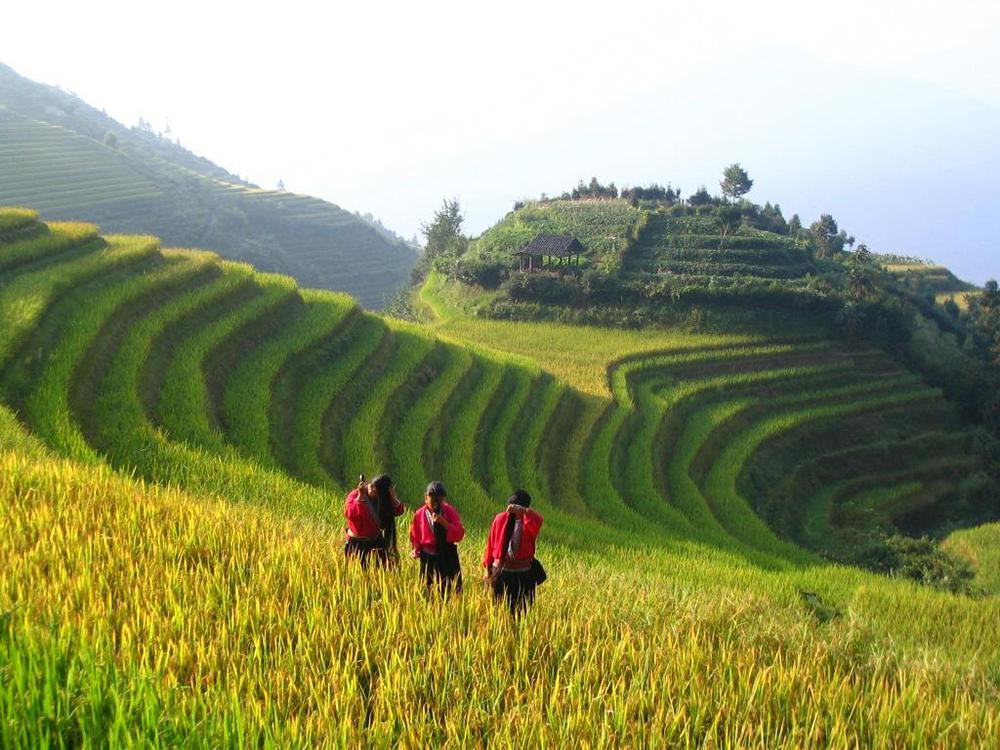 Рисовые террасы Лунцзи в Китае