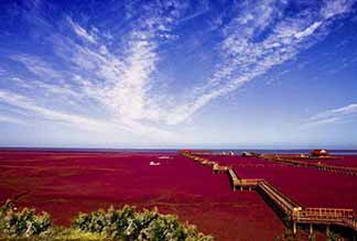 Красный пляж в Паньцзинь