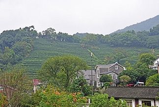 Деревня Лун Цзин в Ханчжоу