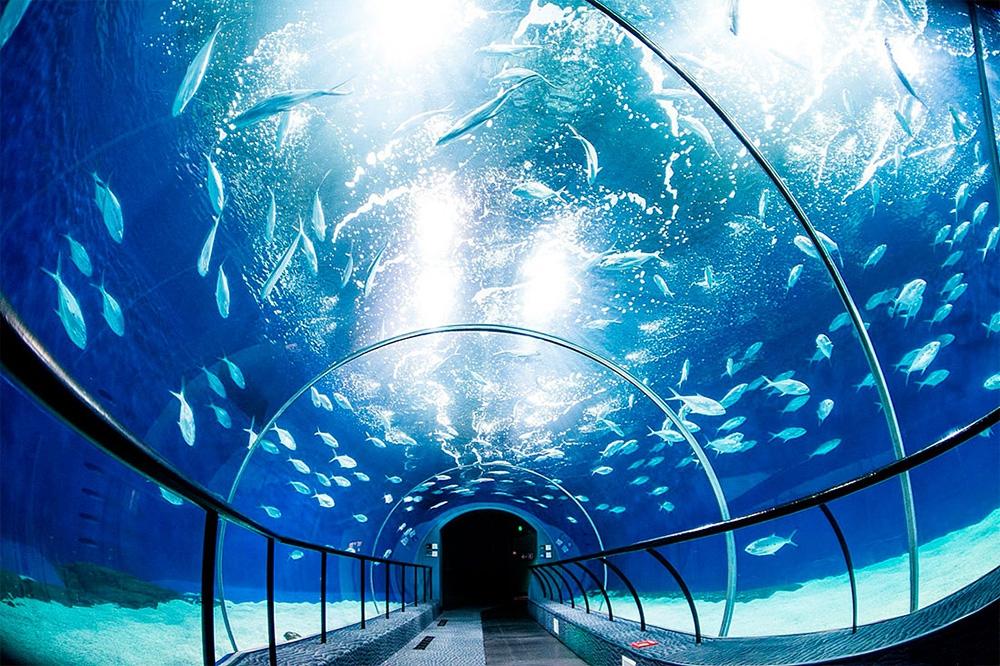 Шанхайский океанариум