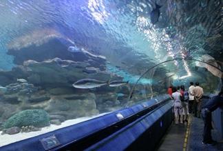 Аквариум «Голубой зоопарк Пекина»