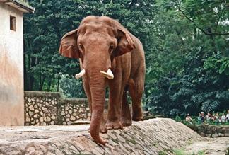 Гуанчжоунский зоопарк