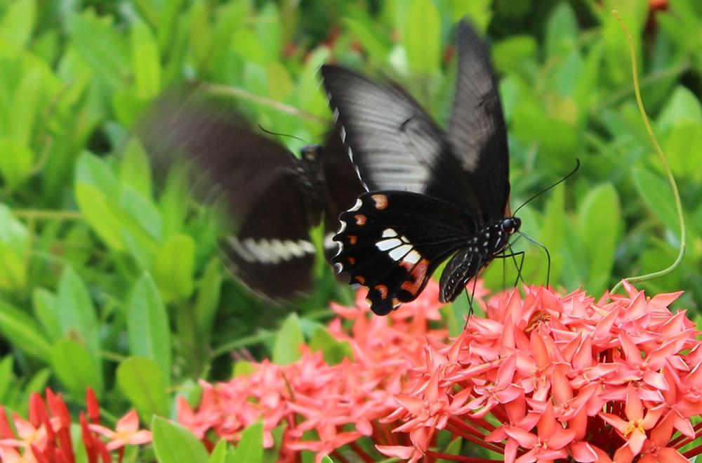 Ущелье бабочек в Санье на острове Хайнань
