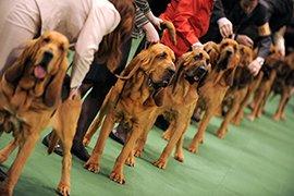 Выставка собак в Китае